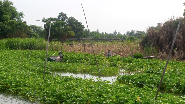 Nakorn Chaisri Flusslandschaft