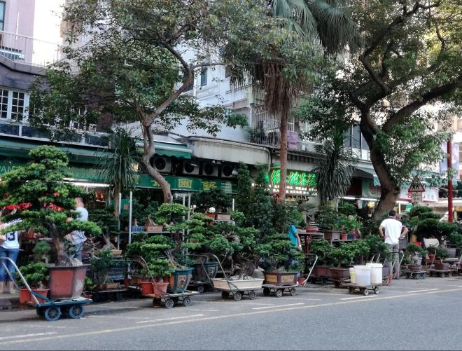Flower Market Mongkok