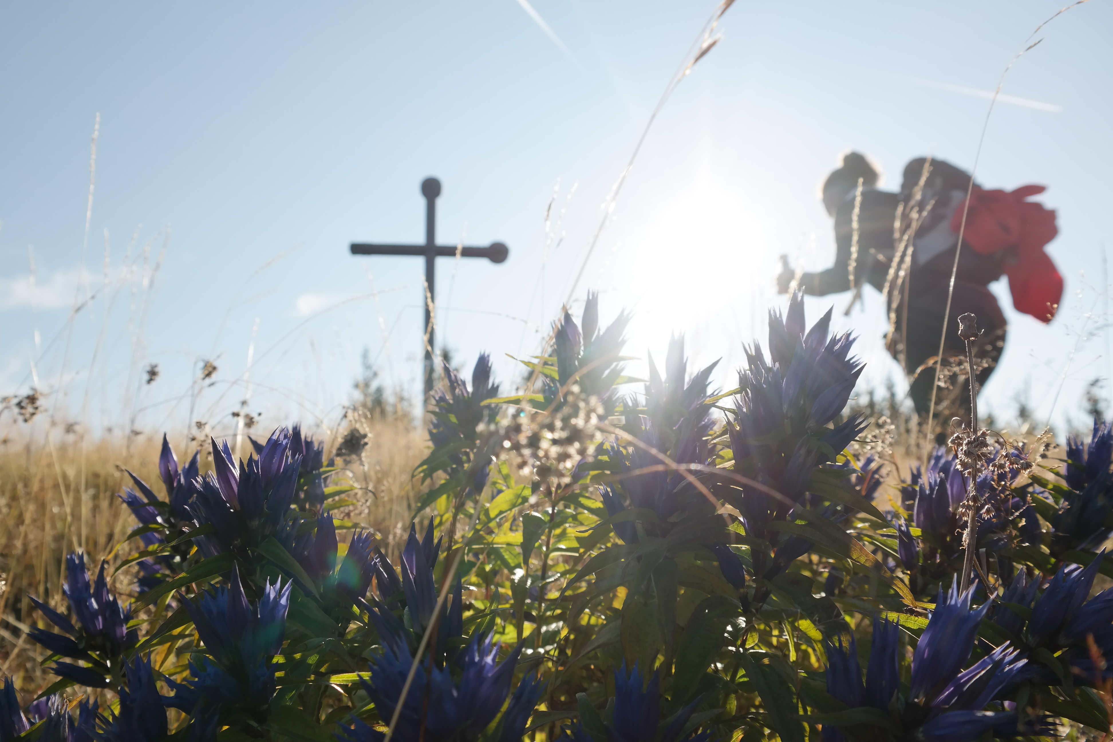 Blumen und Gipfelkreuz