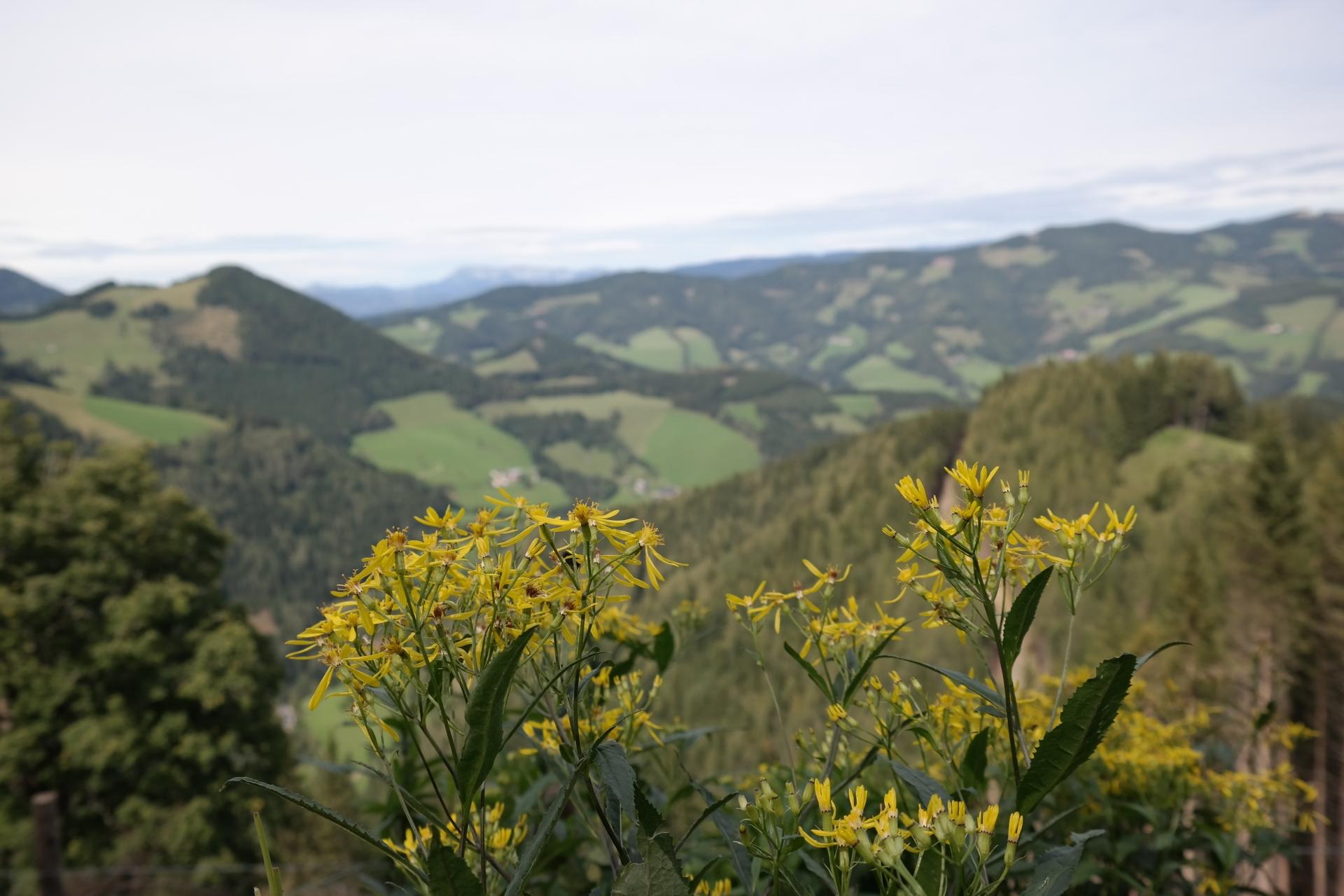 Blumen und Landschaft