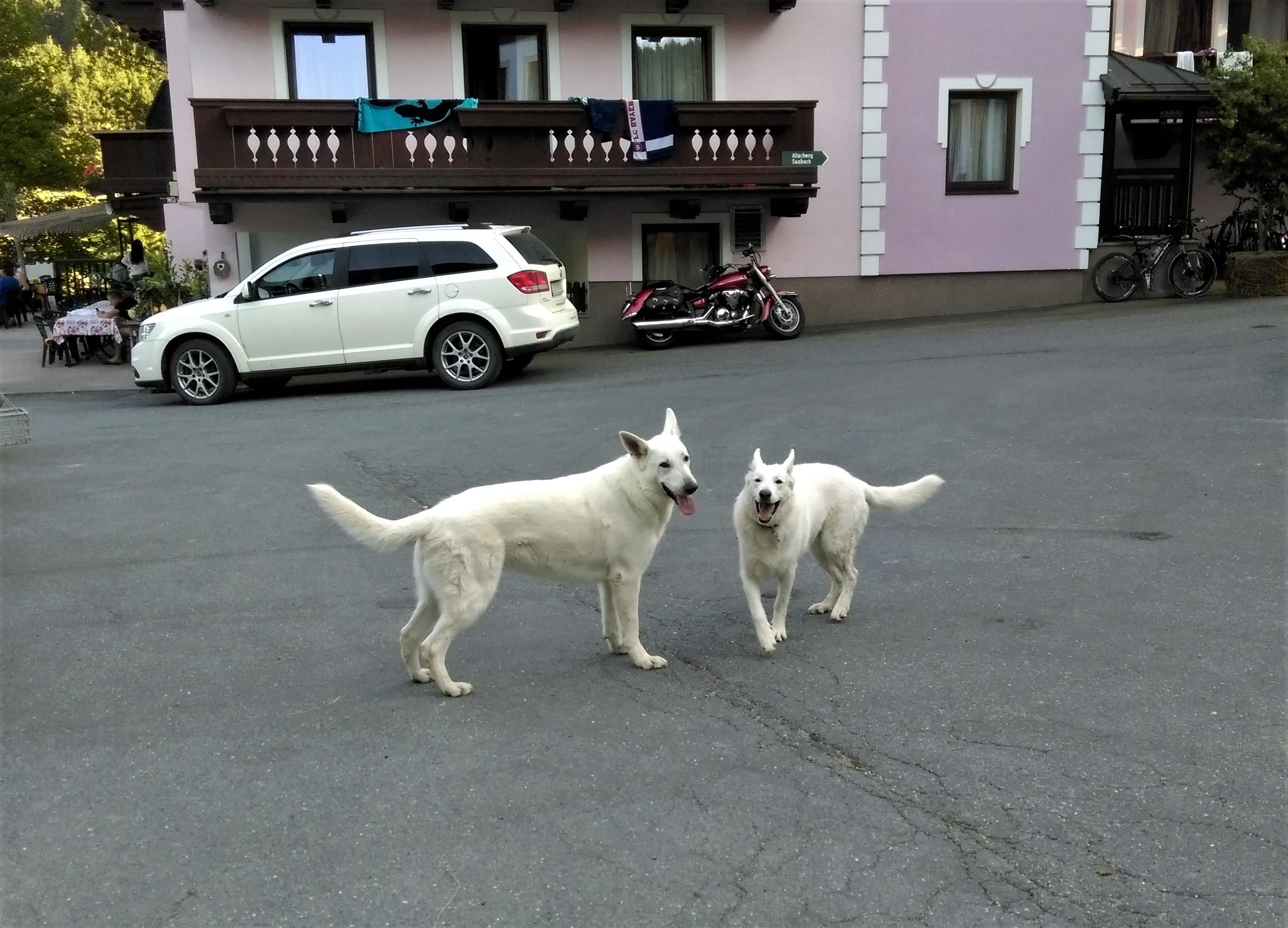 Hunde Altachhof