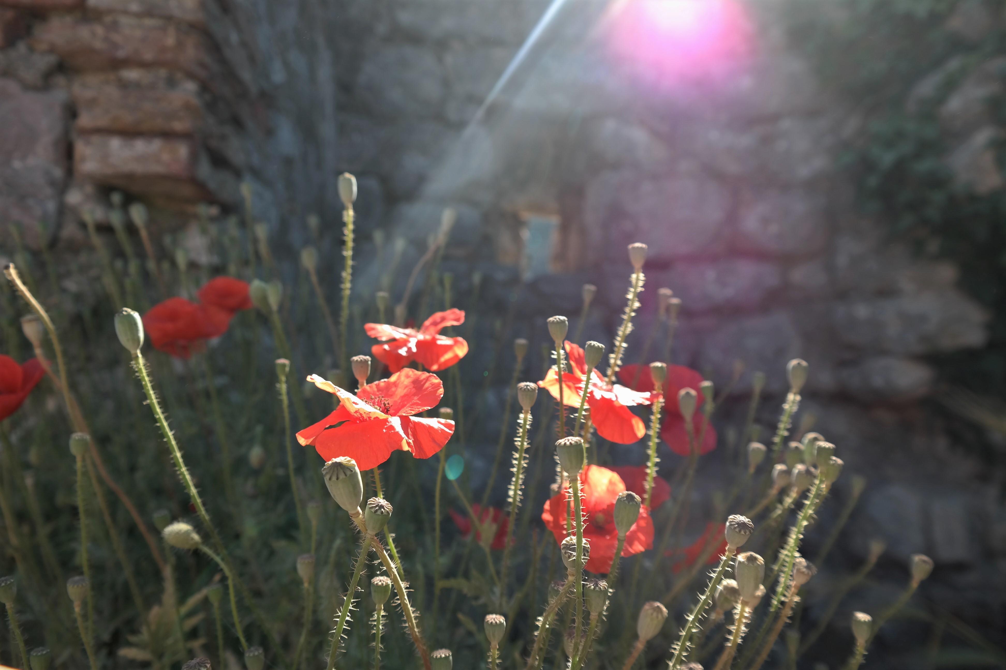 Licht Foto - Montenegro
