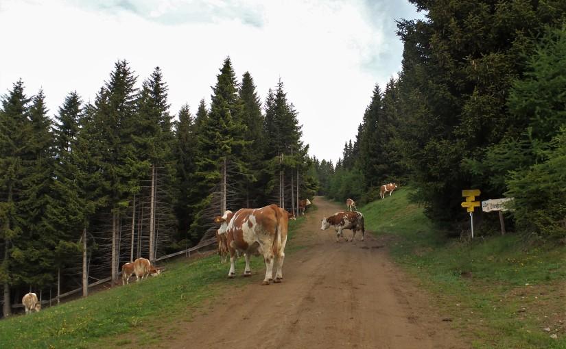 Panoramaweg Zirbitz