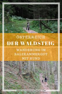 Der Waldsteig beim Salza Stausee in Bad Mitterndorf im Salzkammergut. Wanderung mit dem (Jung-) Hund.