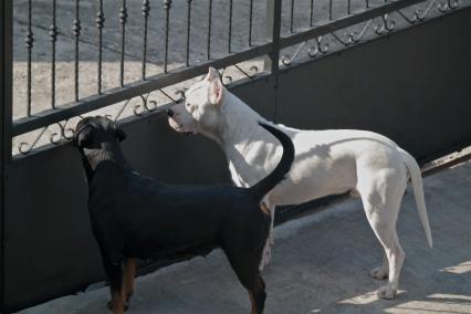 Wachhunde (natürlich nicht freilaufend) ;)