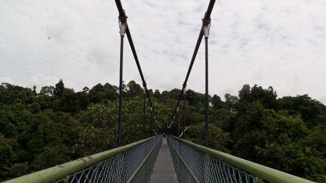 Am TreeTop Walk