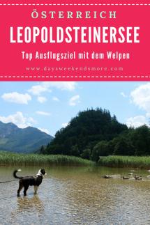 Der Leopoldsteinersee ist ein top Ausflugsziel mit dem Welpen. Schattiger Waldweg, erfrischendes Wasser und abenteuerliche Felsen.