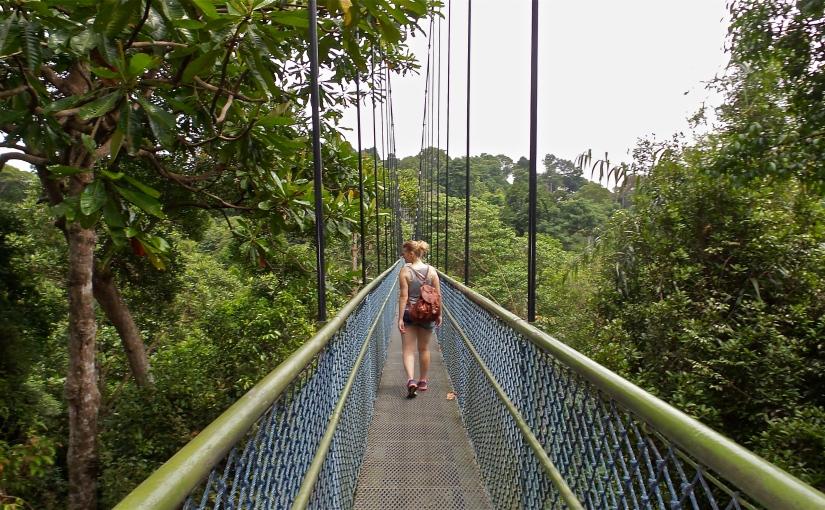 Geheimtipp in Singapur: TreeTop Walk & wandern am MacRitchie NatureTrail