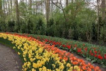 Tulpenblüte in Amsterdam