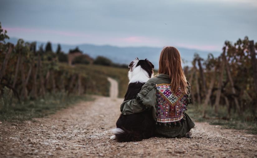 Mein erster Hund zieht ein – die wichtigstenVorbereitungen