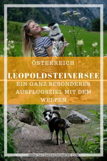 Der Spaziergang um den Leopoldsteinersee ist ein top Ausflugsziel mit dem Welpen. Schattiger Waldweg, erfrischendes Wasser und jede Menge zu entdecken.