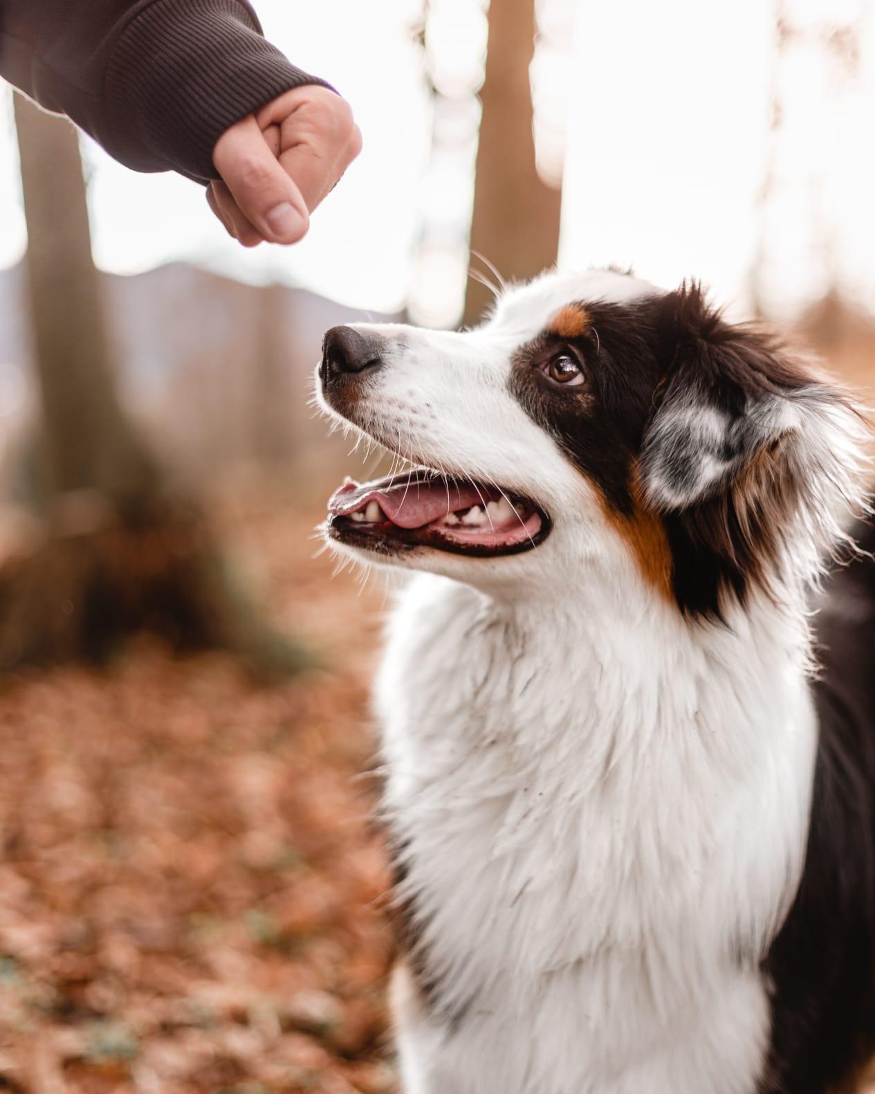 Aufmerksamkeitsübungen für den Hund