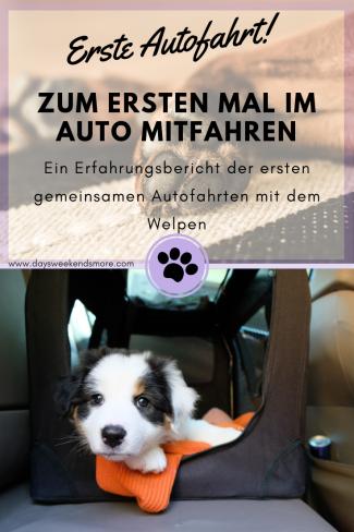 Die ersten gemeinsamen Autofahrten mit dem Welpen. Ein Erfahrungsbericht.