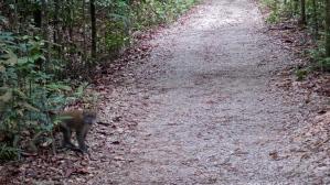 Affe am MacRitchie Nature Trail