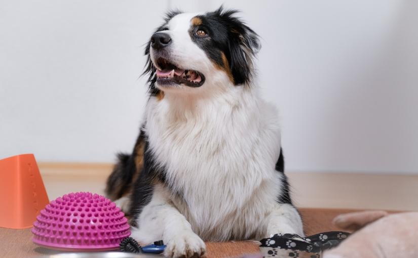 Indoor Hundetraining – 10  Tipps wie du deinen Hund zu Hause beschäftigenkannst