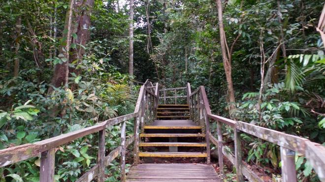 MacRitchie Nature Trail Singapur