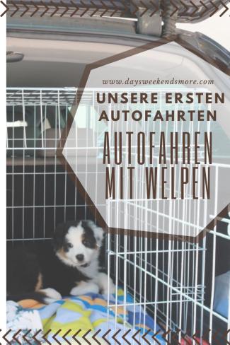 Die ersten Autofahrten mit dem Welpen. Ein Erfahrungsbericht.