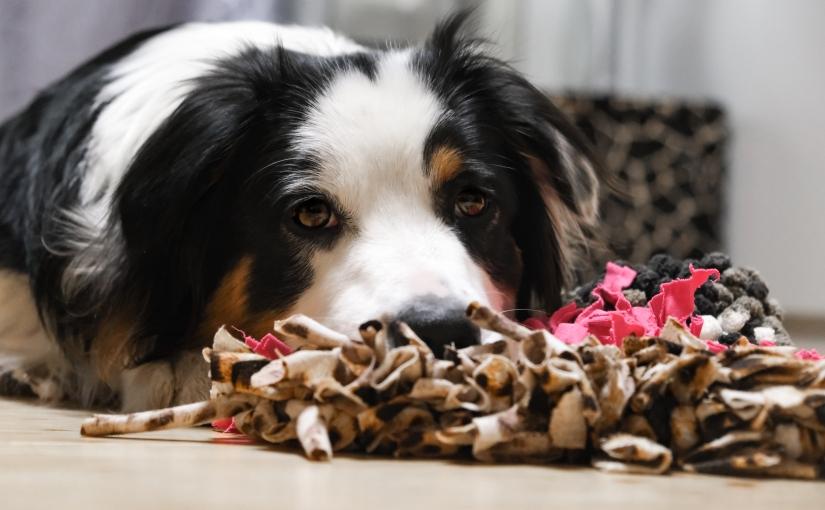 Futterspiele für den Hund – IndoorBeschäftigung