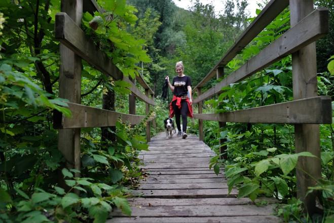 Spaziergang mit Welpen Graz-Umgebung