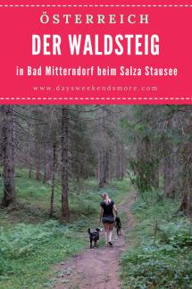 Der Waldsteig beim Salza Stausee in Bad Mitterndorf. Wanderung mit dem Hund.