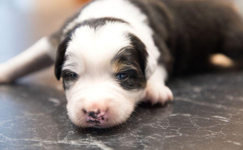 Hund ja oder nein? – 8 Überlegungen bevor ich mich für einen Welpen entschiedenhabe