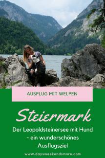 Der Leopoldsteinersee ist ein top Ausflugsziel mit dem Welpen. Schattiger Waldweg, erfrischendes Wasser und abenteuerliche Felsen und gemütlicher Rundweg