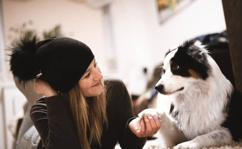 Leichte Aufmerksamkeitsübungen für den Hund – IndoorBeschäftigung