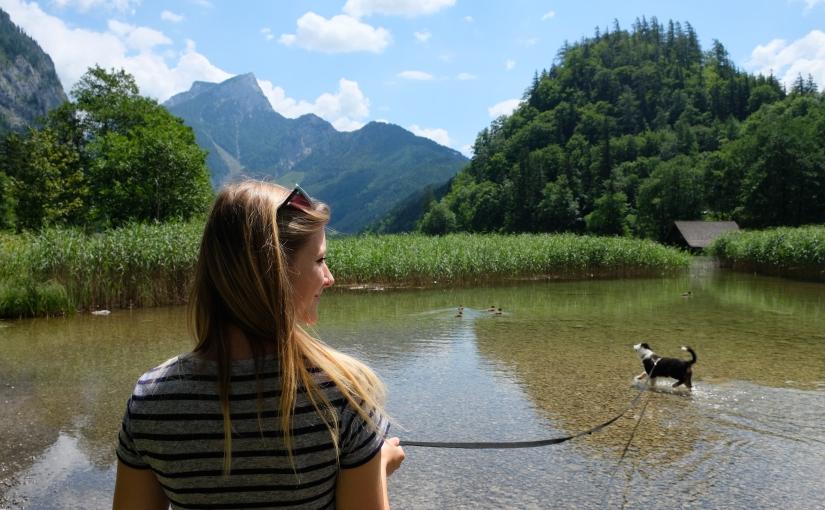 Auf zum Leopoldsteinersee – ein wunderschöner Ausflug mitWelpen